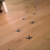 Bird footprint stickers on the floor, leading you around the exhibition