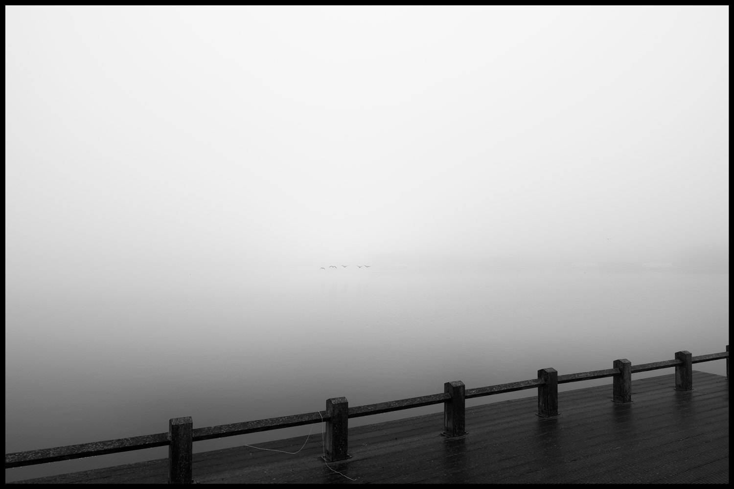 Five flying Canadian geese emerging from the fog. In the foreground is a small wooden jetty