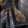 A girl looking at an ancient Egyptian mummy in a glass case