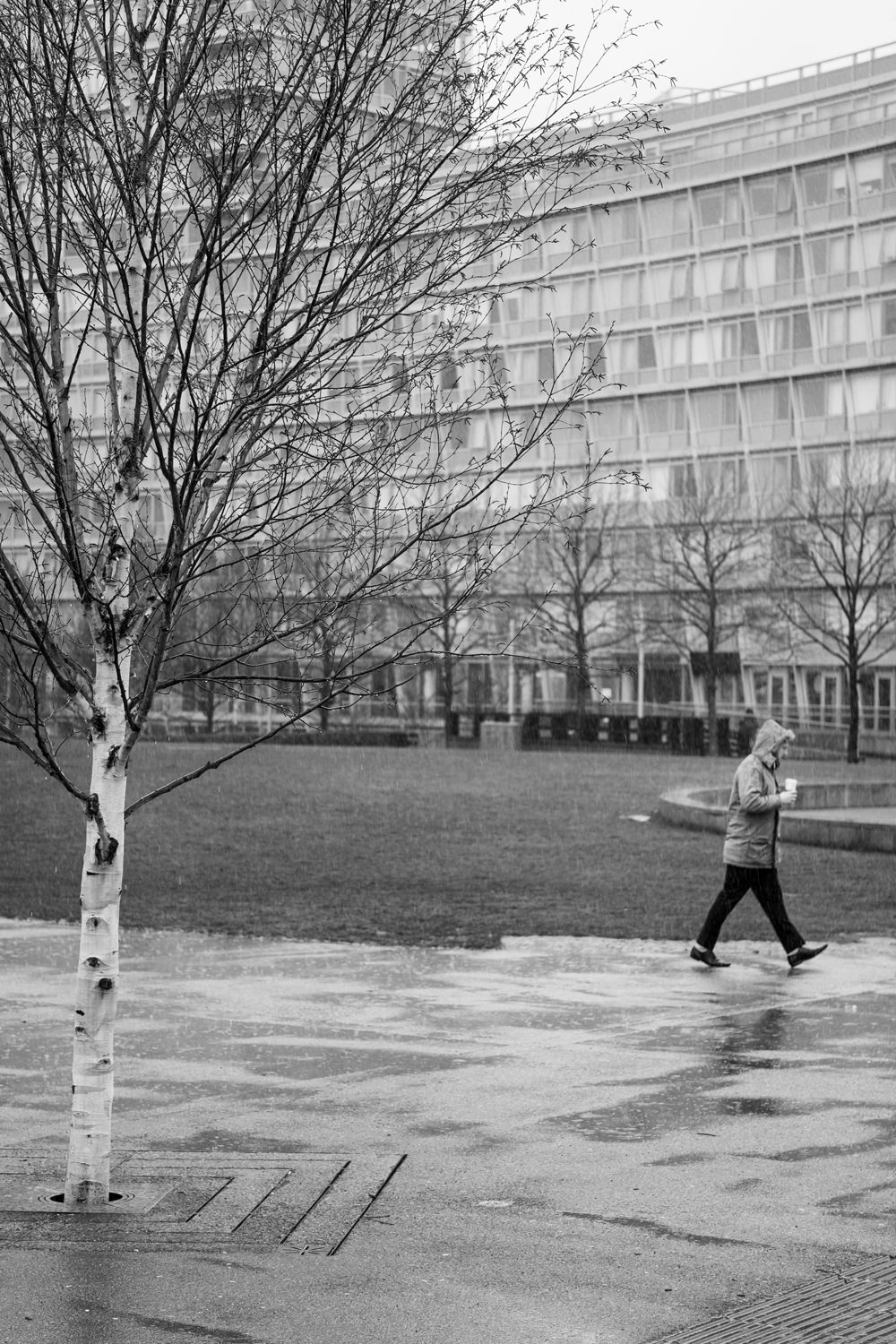 A man walking through the rain past a tree and multi-storey building. He has his hood up and is holding a hot drink