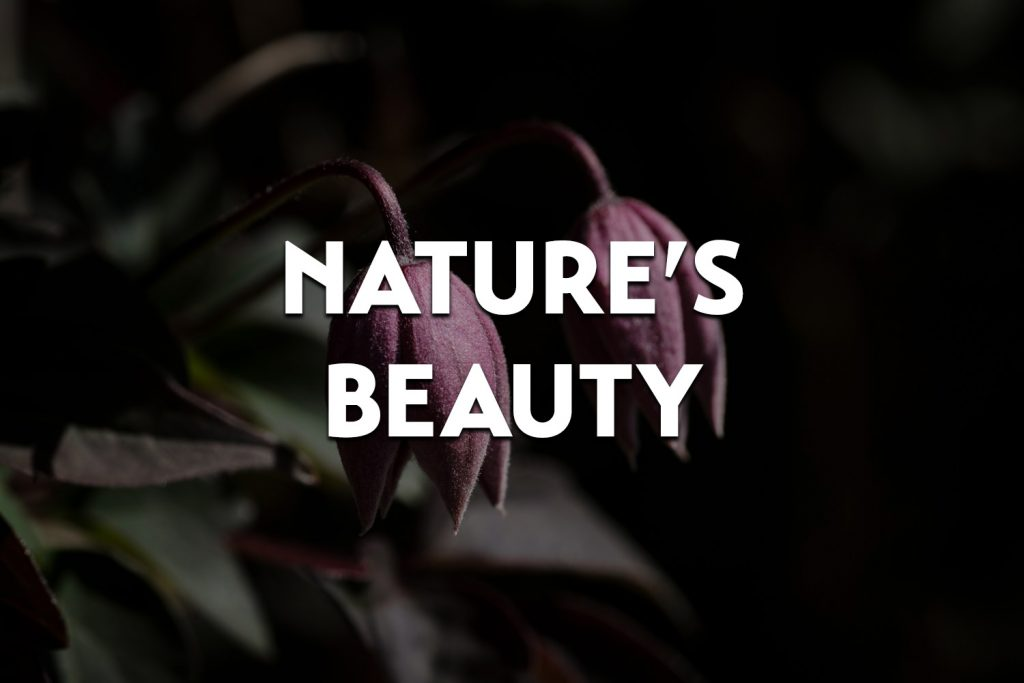 featured image for the nature's beauty gallery